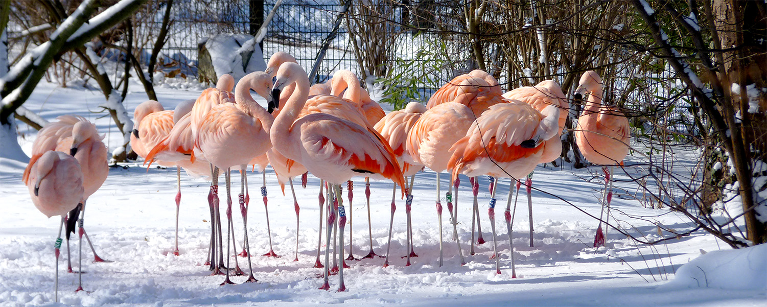 Chile-Flamingos.jpg